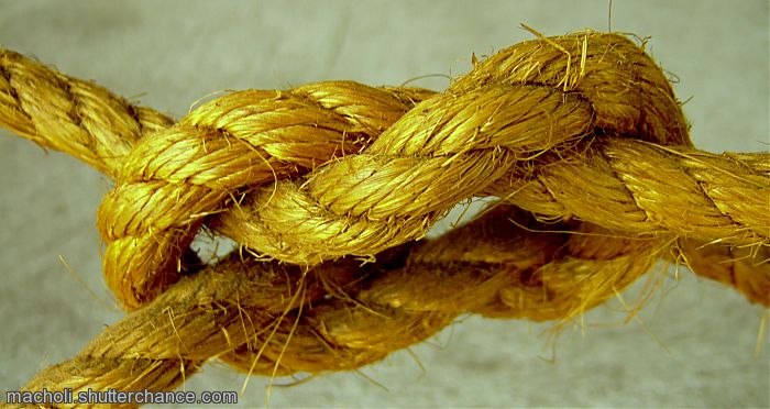 photoblog image Knot's united
